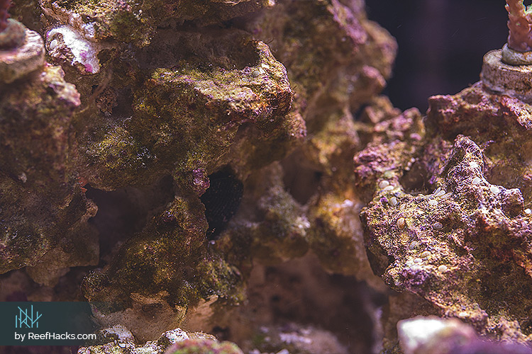 Cycling A Dry Live Rock In Reef Tank