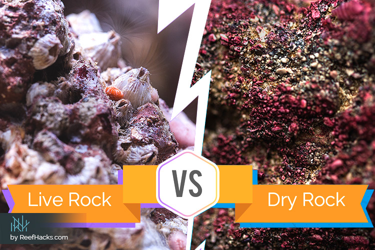 Understand The Difference Live Rocks Vs Dry Rocks With Photos