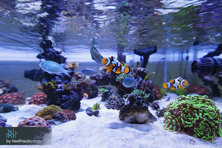 Aquascape Ideas Marine Tank | Bruin Blog