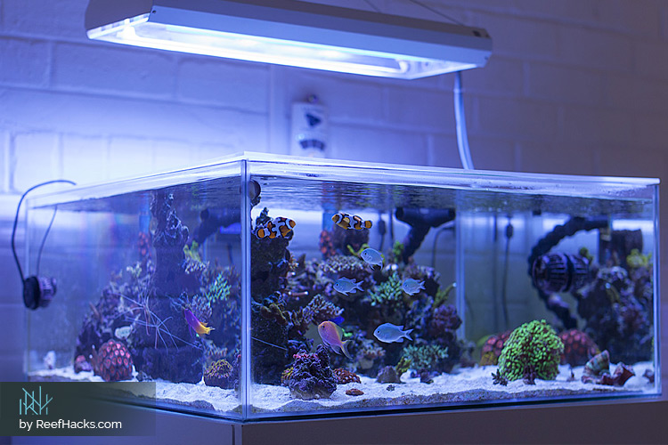 how to choose your ideal method of nutrient export for your reef tank